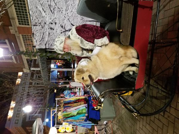 Salem Rotary Dog Park