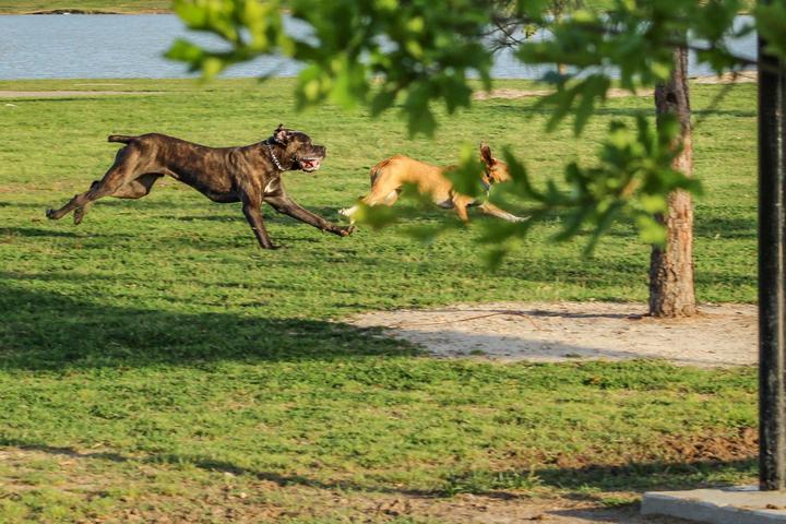 Pet Friendly Blair Park