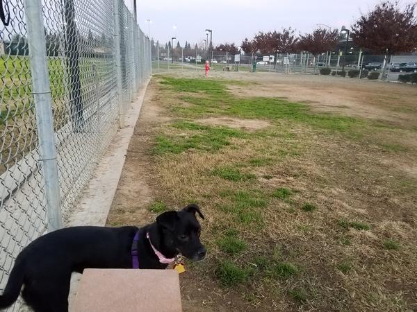 Todd Beamer Dog Park Fresno Ca