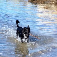 Spike having fun swimming