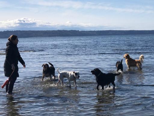 Water Lovin' Pups!