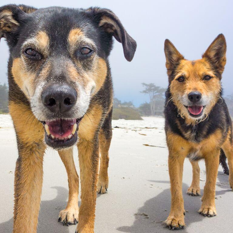 Tennessee and Sabina at the beach