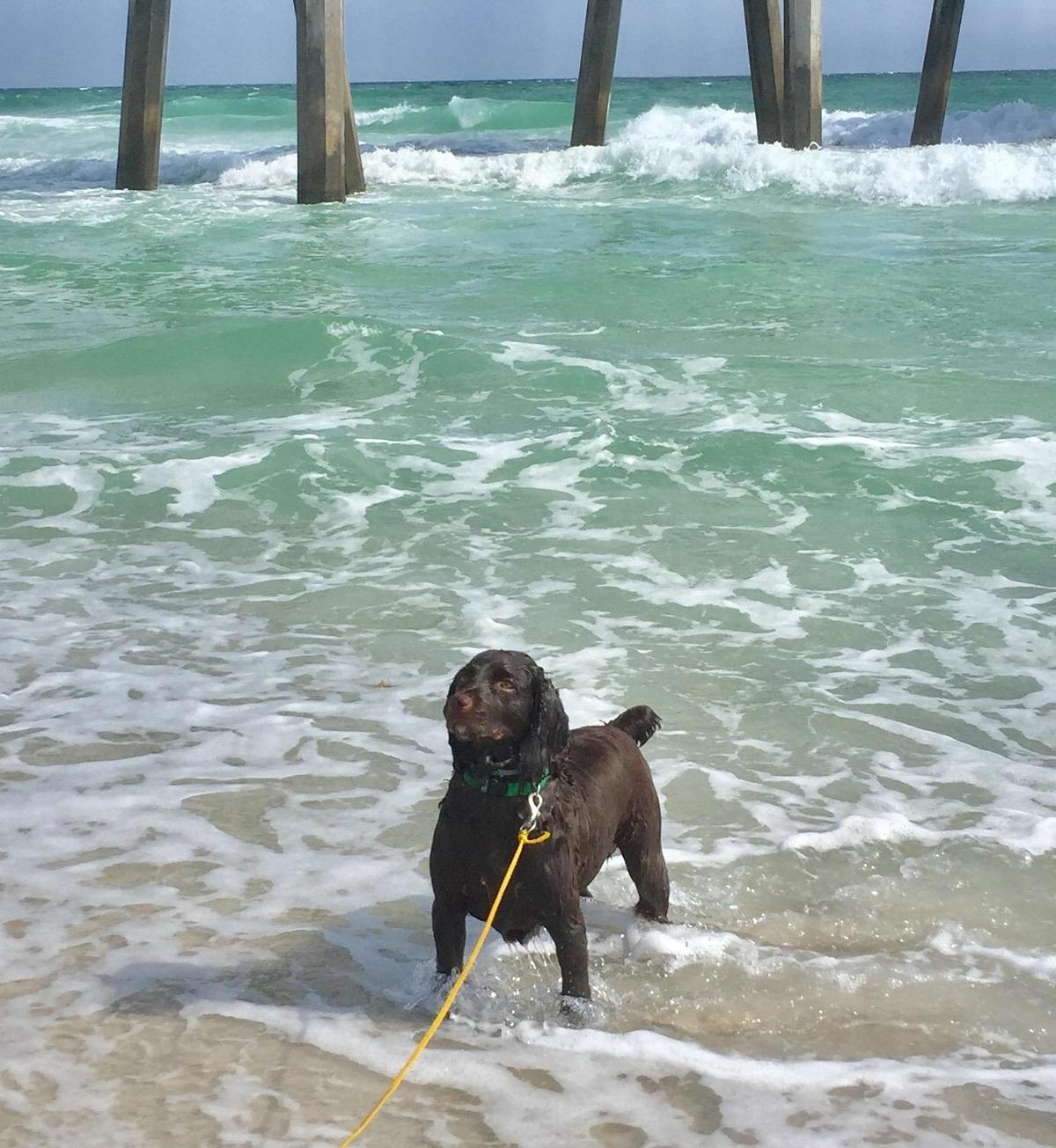 Augie at the beach