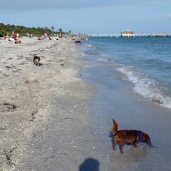 Ft De Soto Dog Beach 03.2017