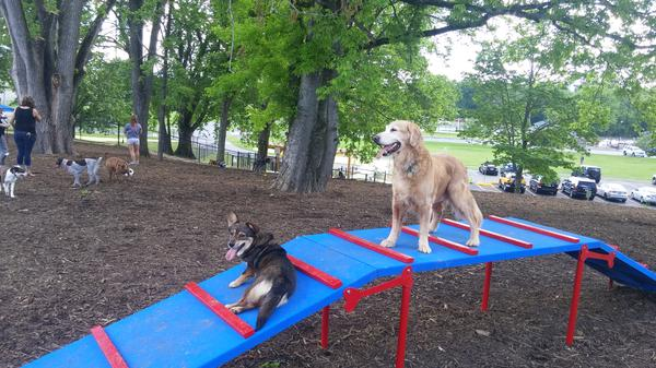 Pet Friendly Sevierville's PetSafe Unleashed Dog Park