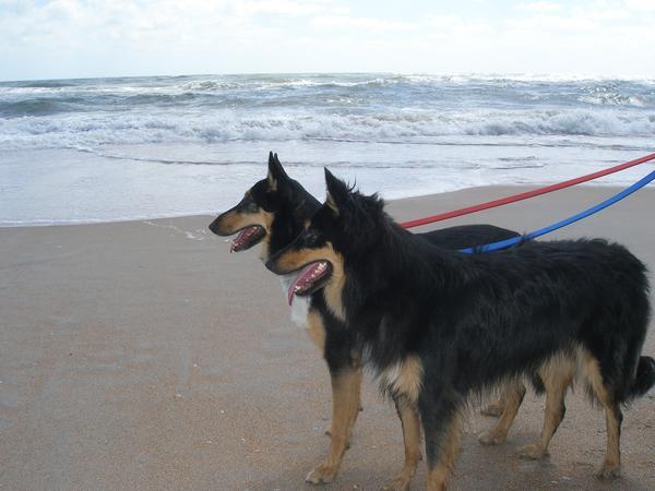 Vilano Beach Dog Friendly Hotels