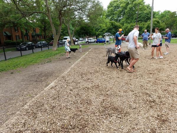Dog Friendly Beaches Norfolk Va