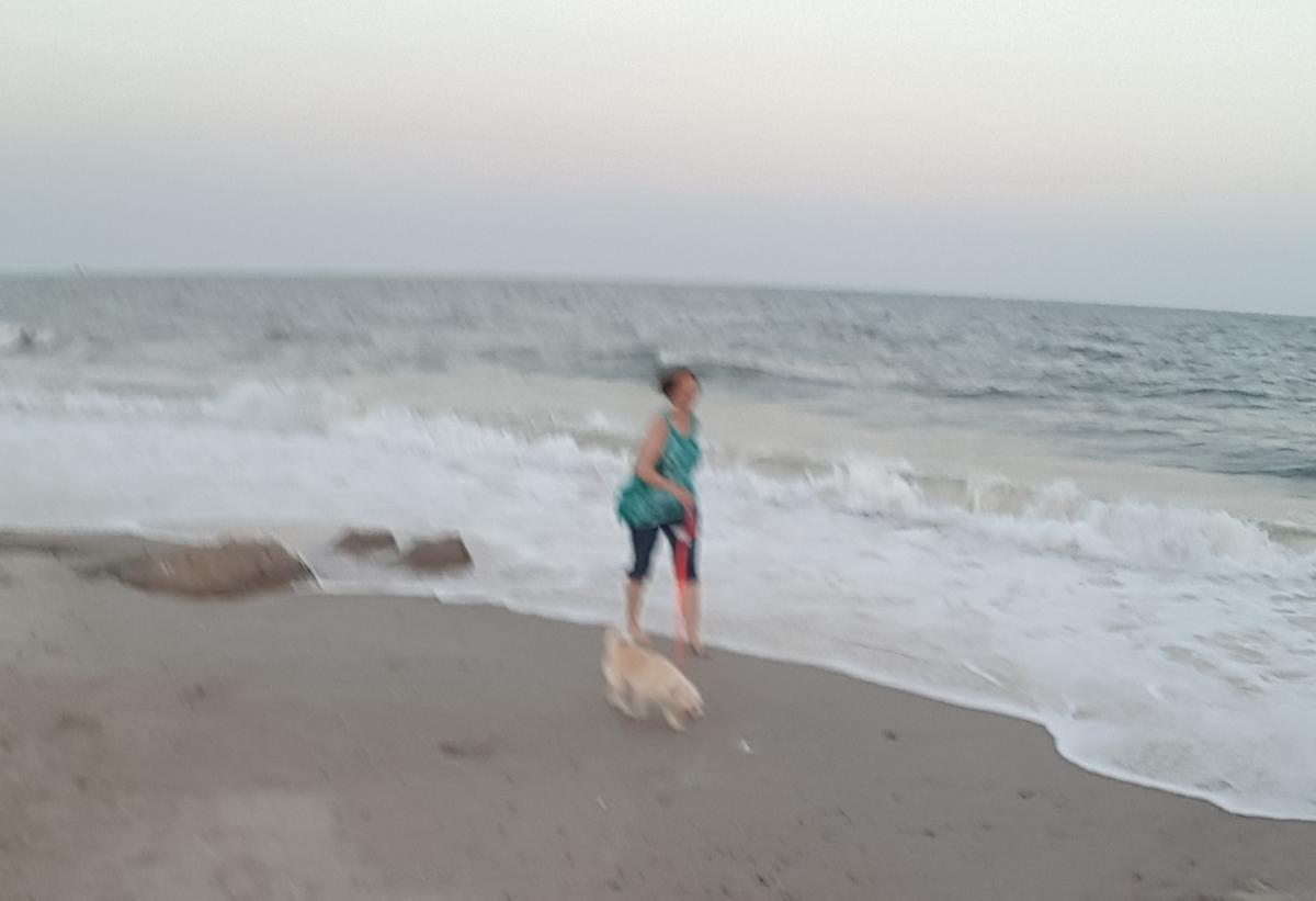 Dog loves beach