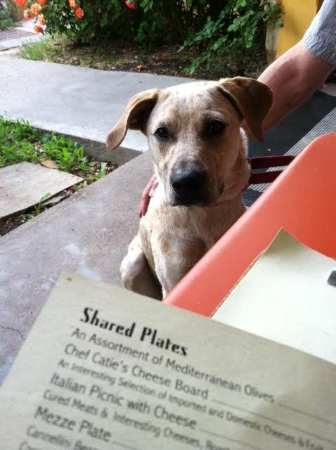 Stargaze with your pup on the dog-friendly patio at TerraCotta Wine Bistro.