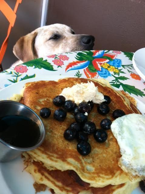 Tune-up Cafe is a dog-friendly restaurant that's been featured on TV for its Southwestern comfort food.