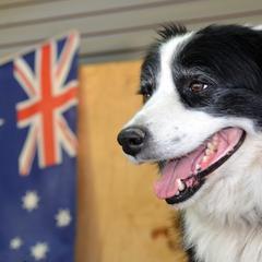Handsome Aussie