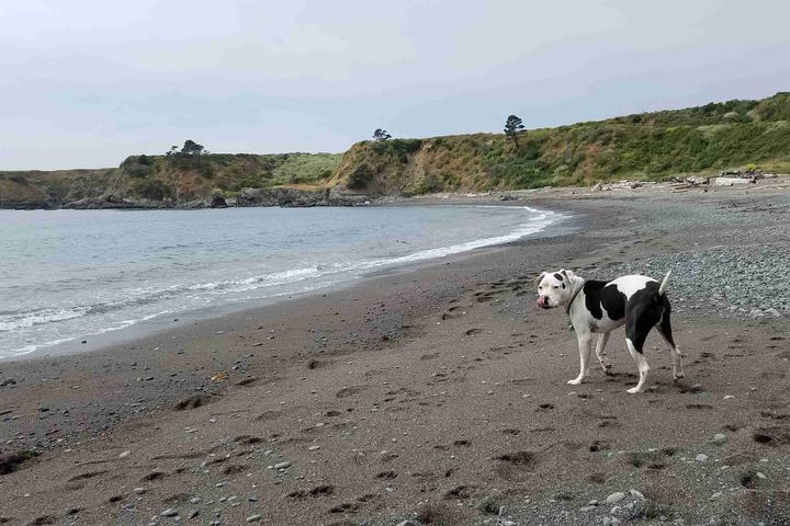 Dog Owner's Guide to Fort Bragg, CA