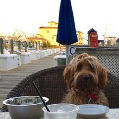 Sunny enjoying dinner at Mickey Fins