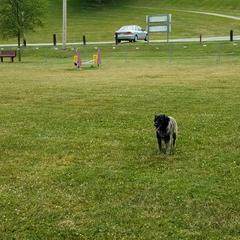 Frankenmuth dog park