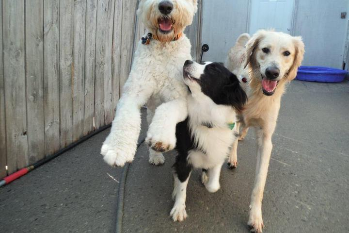 Pet Friendly Pets R People 2