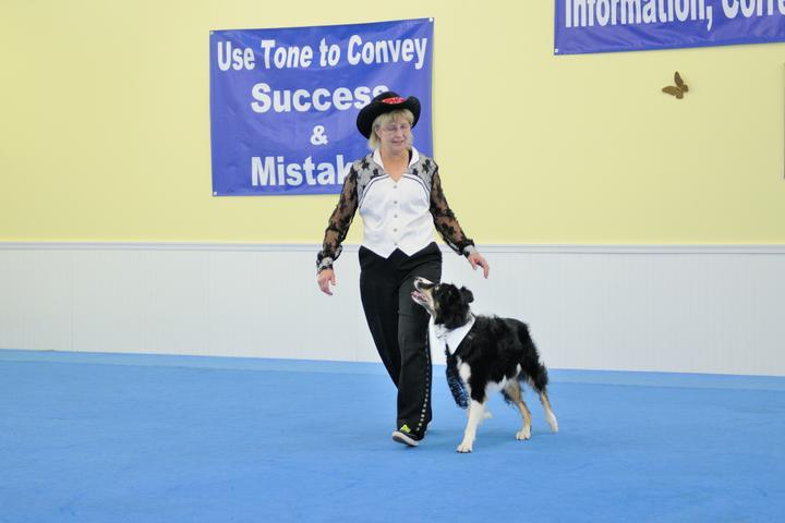 Pet Friendly Papillonia Dog Training Academy