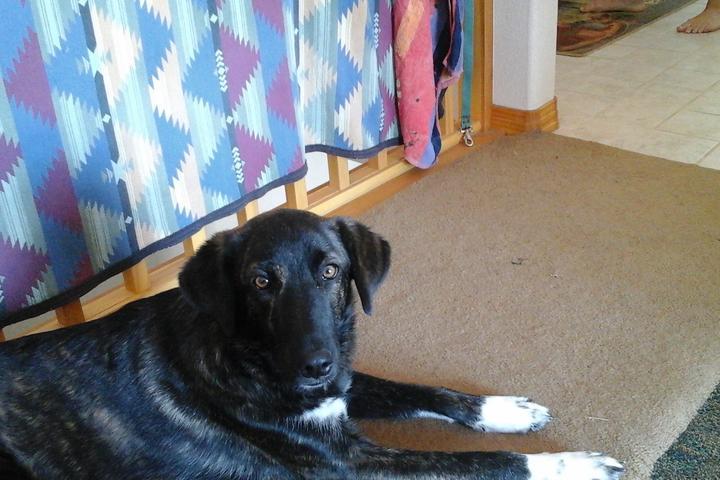 Pet Friendly TLC Services Pet & Plant Care While You're Away