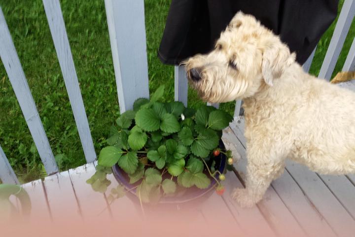 Pet Friendly Watch Dogzz