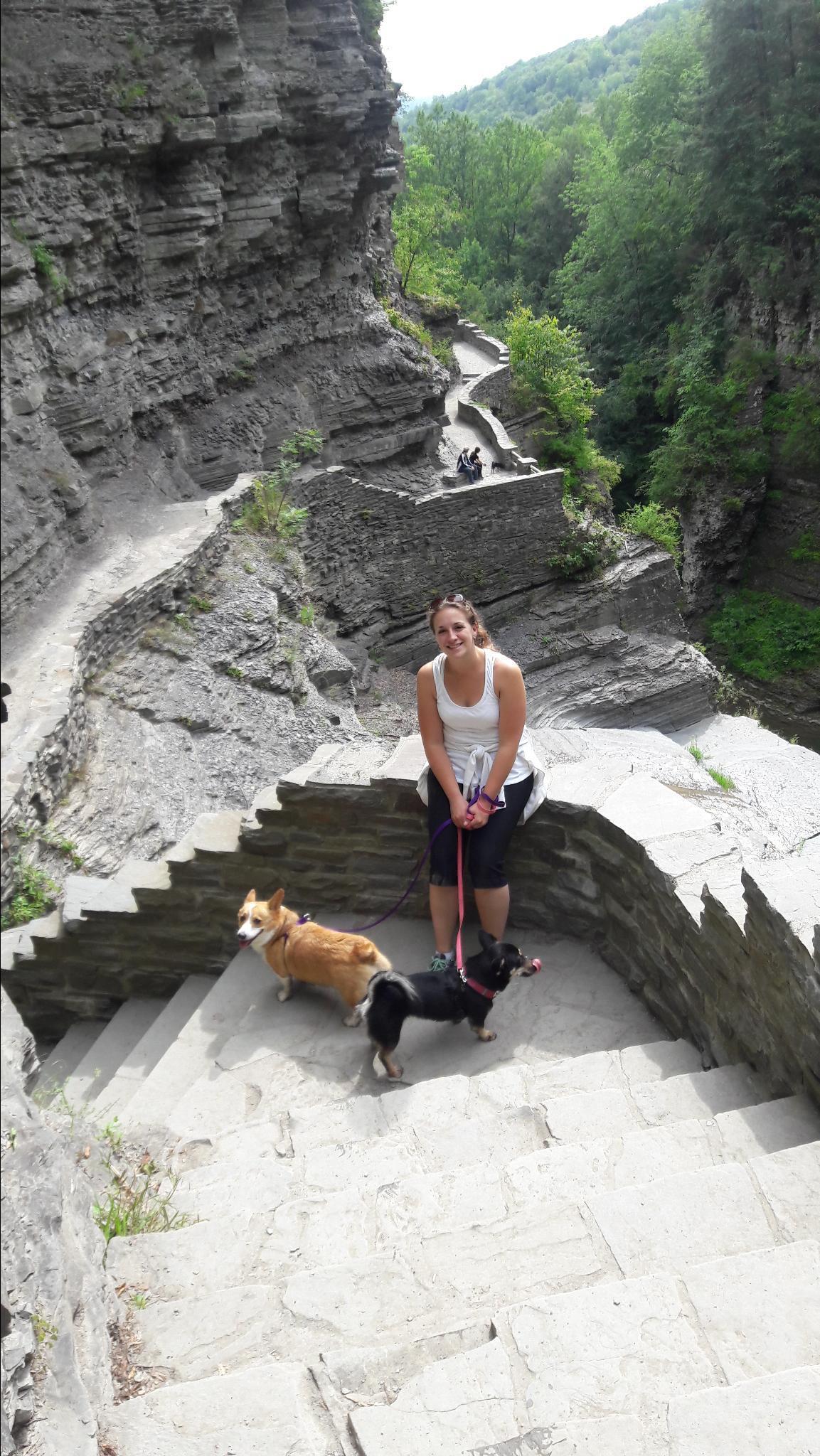 Dog Friendly Hotels Ithaca Ny