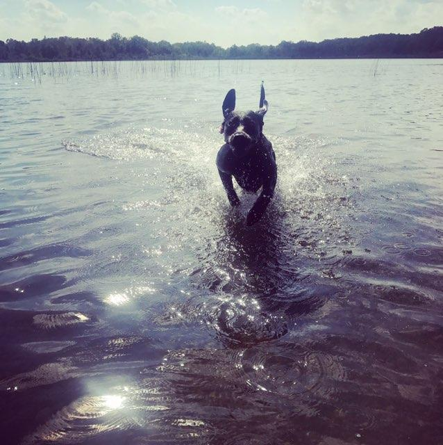 Piper swimming