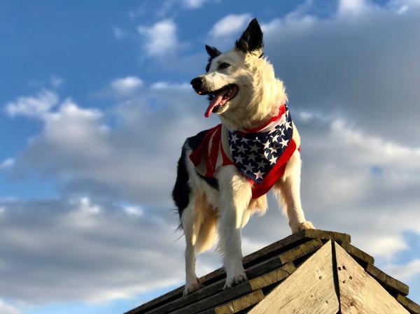 Burlington County Dog Friendly Trails