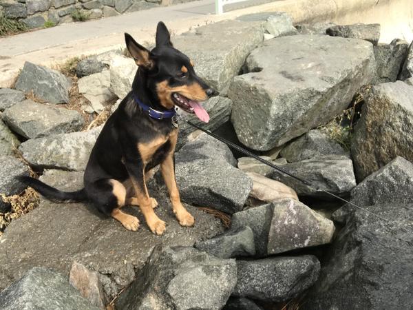 Dog Friendly Hotels Newport Ri