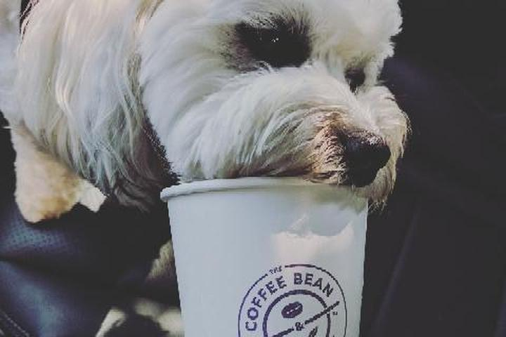 Pet Friendly The Coffee Bean & Tea Leaf