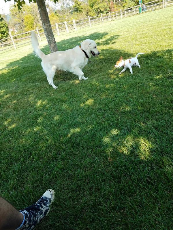 Polk Valley Dog Park