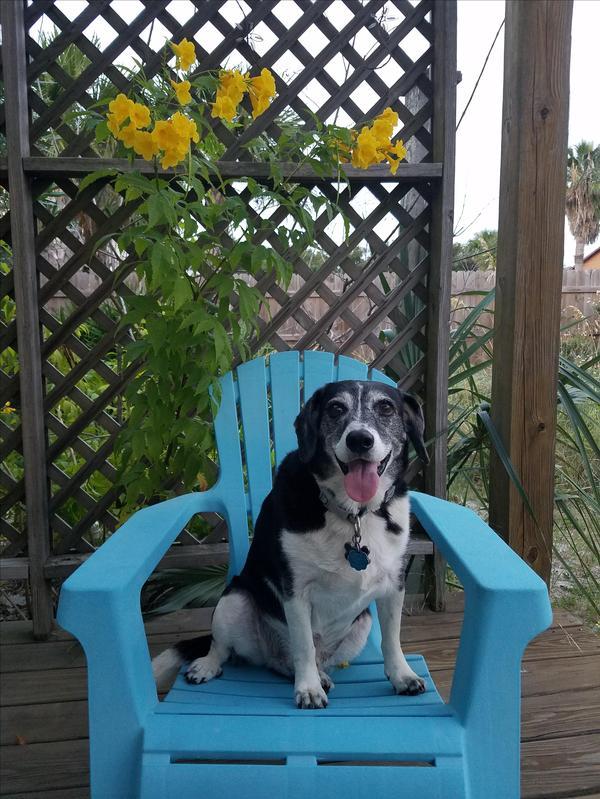 Dog Friendly Hotels Pensacola Fl