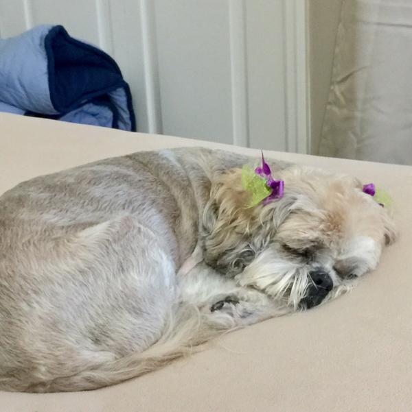 Dog Grooming Lehigh Acres Fl