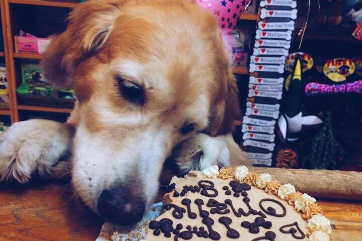 Pet Friendly Three Dog Bakery – Memphis