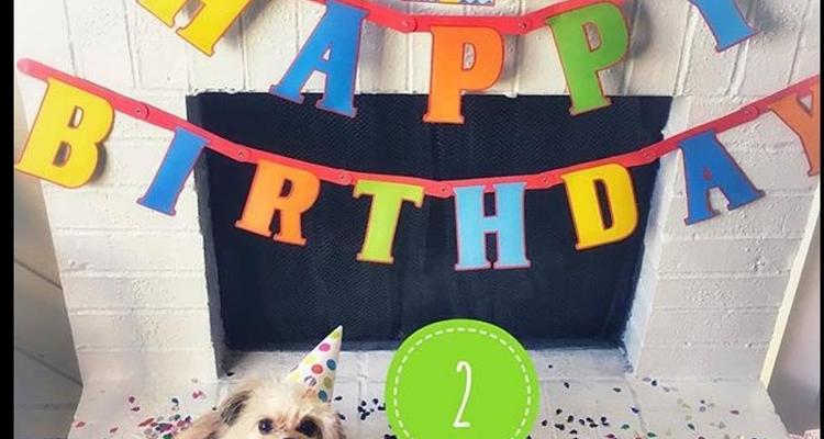 Pleasing Three Dog Bakery Uptown Dallas Personalised Birthday Cards Akebfashionlily Jamesorg