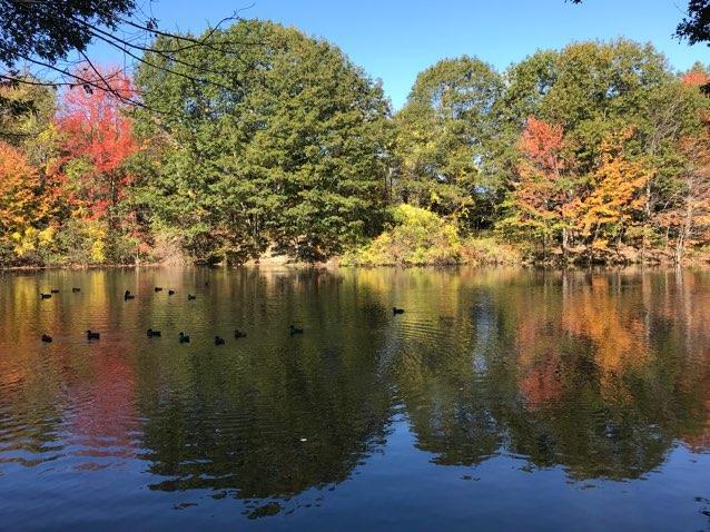 Hinkley Park pond in autumn