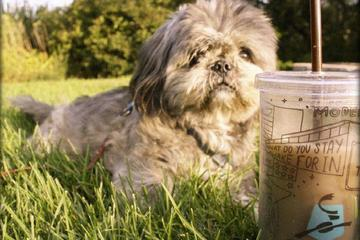 Pet Friendly Caribou Coffee