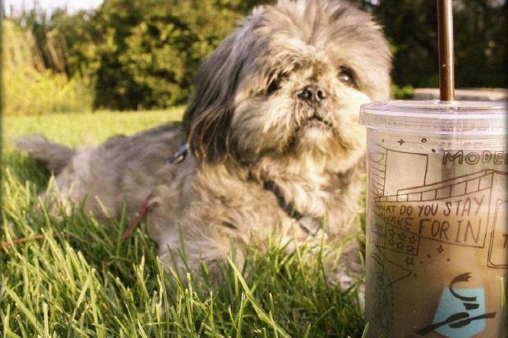 Pet Friendly Caribou Coffee