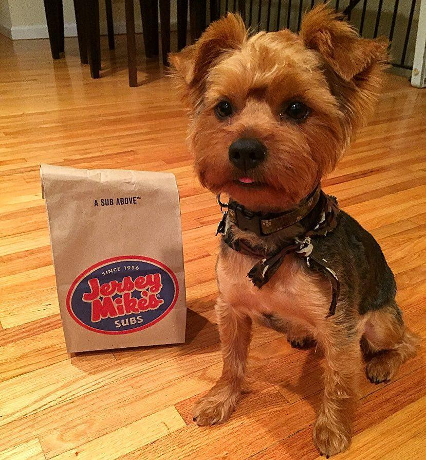 Dogs Love Jersey Mike's