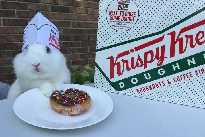 Pet Friendly Krispy Kreme Doughnuts