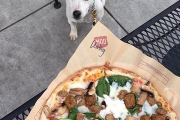 Pet Friendly MOD Pizza