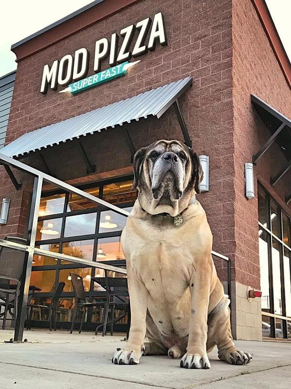 Phoenix Hotels That Allow Large Dogs