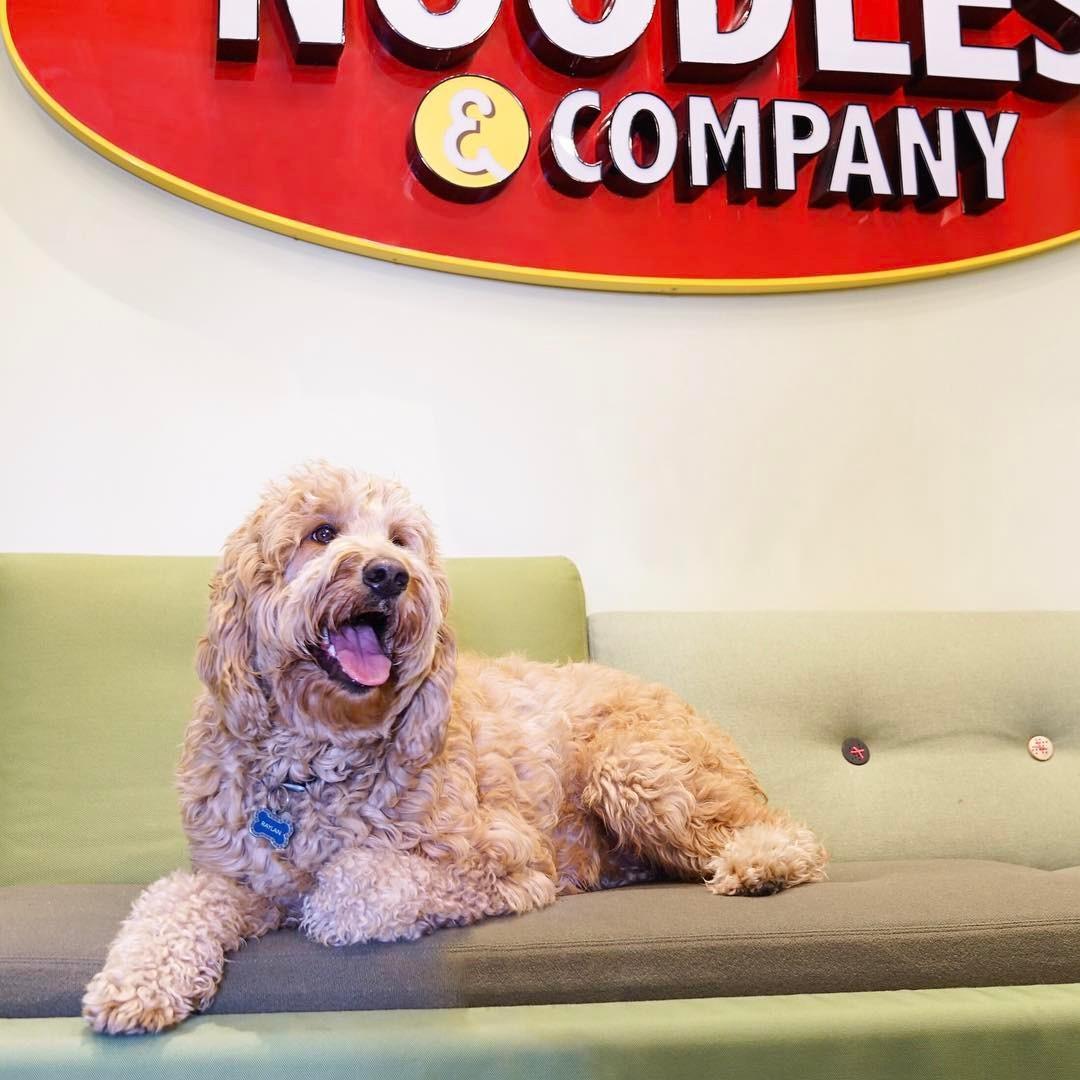 noodles & company is pet friendly