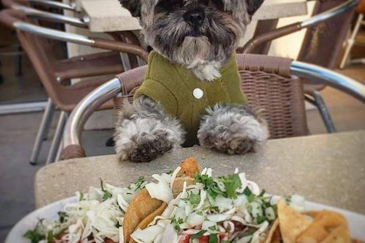 Dog Friendly Restaurants in Chula Vista, CA - Bring Fido