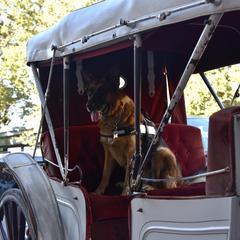 Horse  carriage  fun