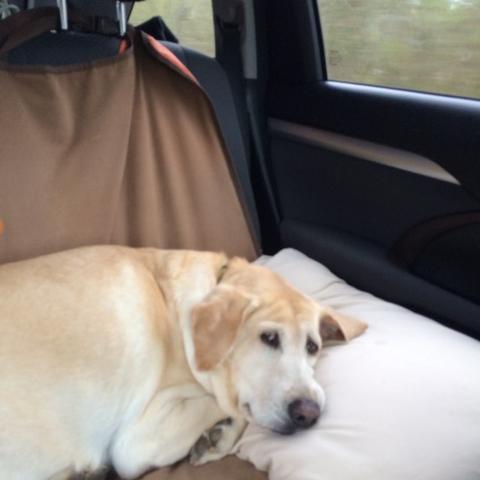 Savannah Dog Friendly Tours