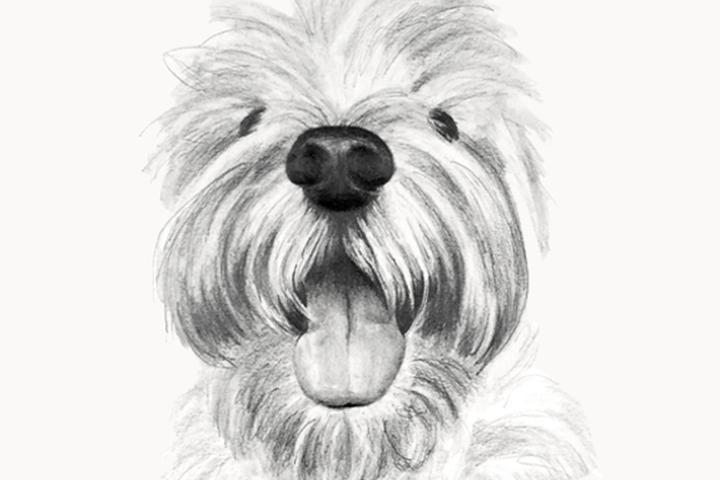 Pet Friendly Pup Doodles