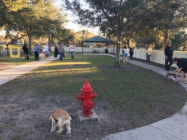 Dog Friendly Springs In Florida