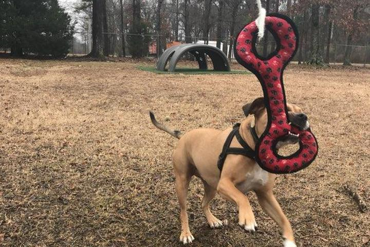 Dog Owner's Guide to Maumelle, AR