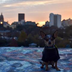 Overlooking Austin at Sunrise