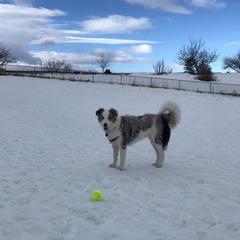 playing ball
