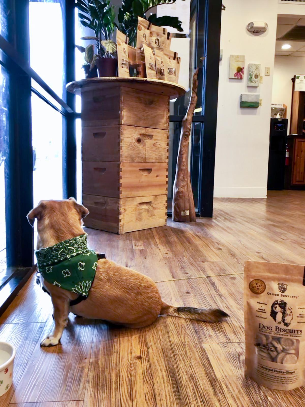 A dog visits Savannah Bee Company.