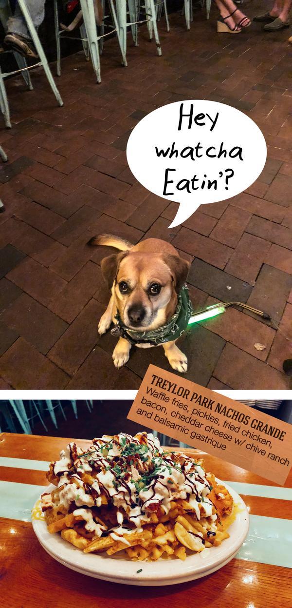 Astro the Dog @ Treylor Park Savannah